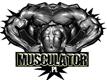 musculator-pl-12748